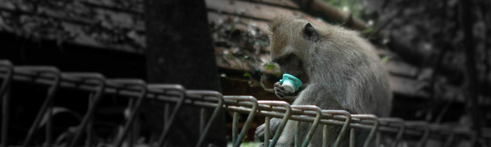 Schnuller von Affe geraubt – was nun?